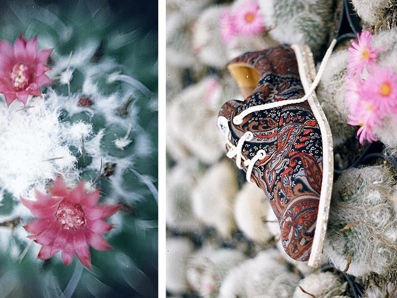 sapatos ecológicos insecta shoes editorial