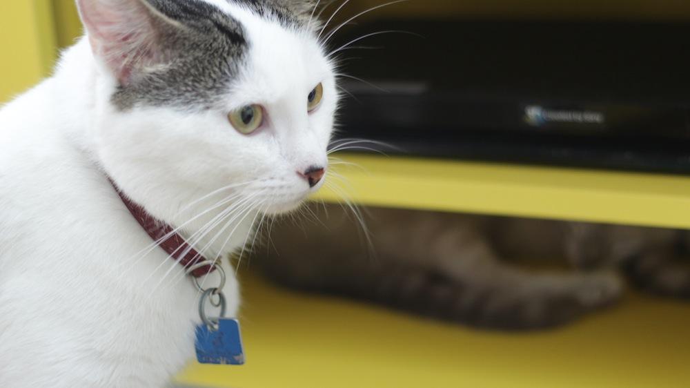 gatinhos 10