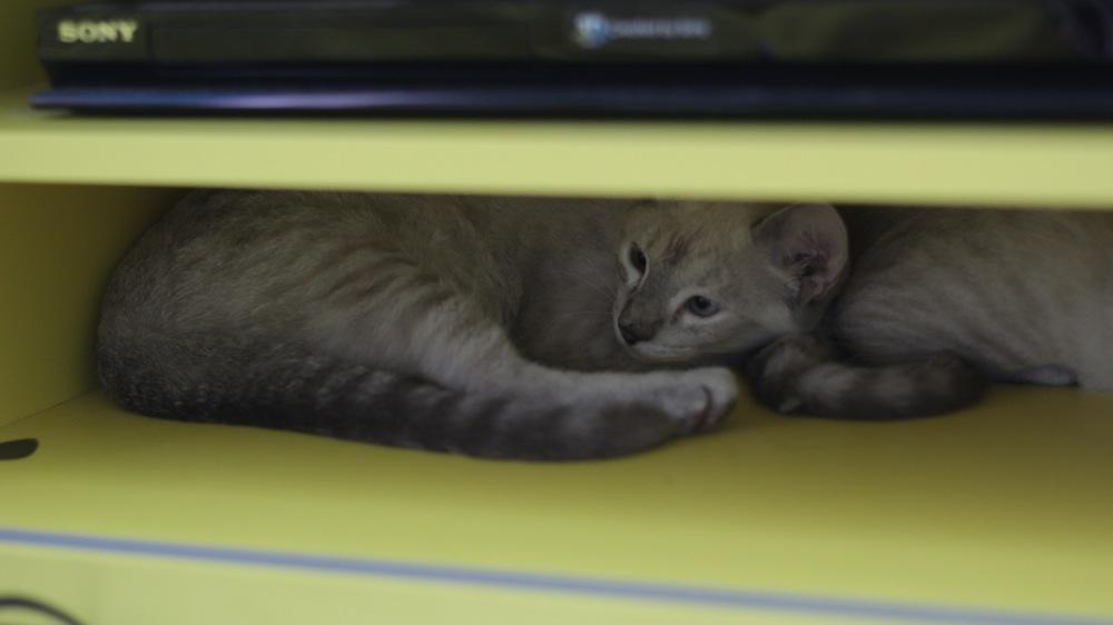 gatinhos 11