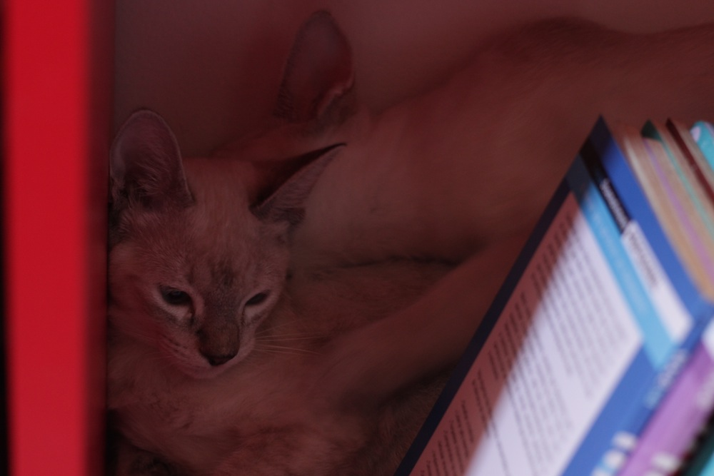 gatinhos 3