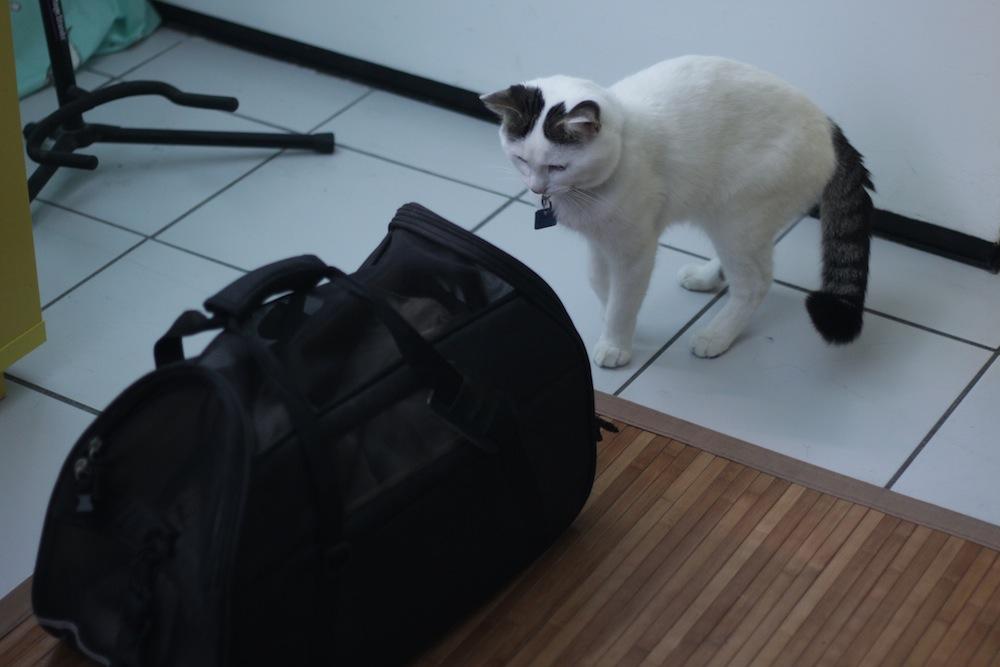 gatinhos 6