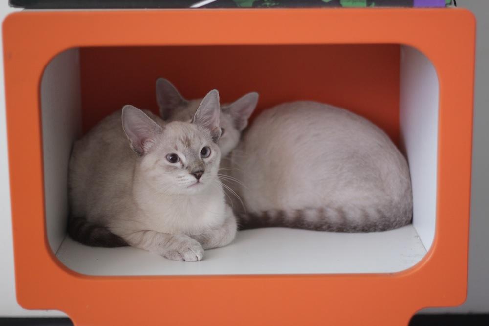 gatinhos 8