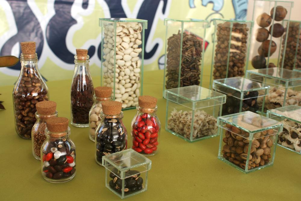 Sementes da flora da Colônia Ecológica Sesc Iparana