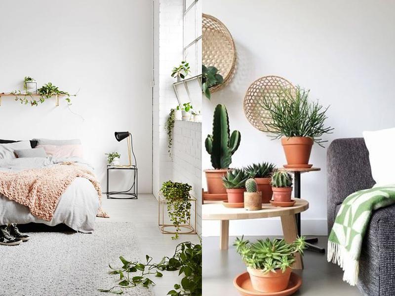 estilo-escandinavo-plantas